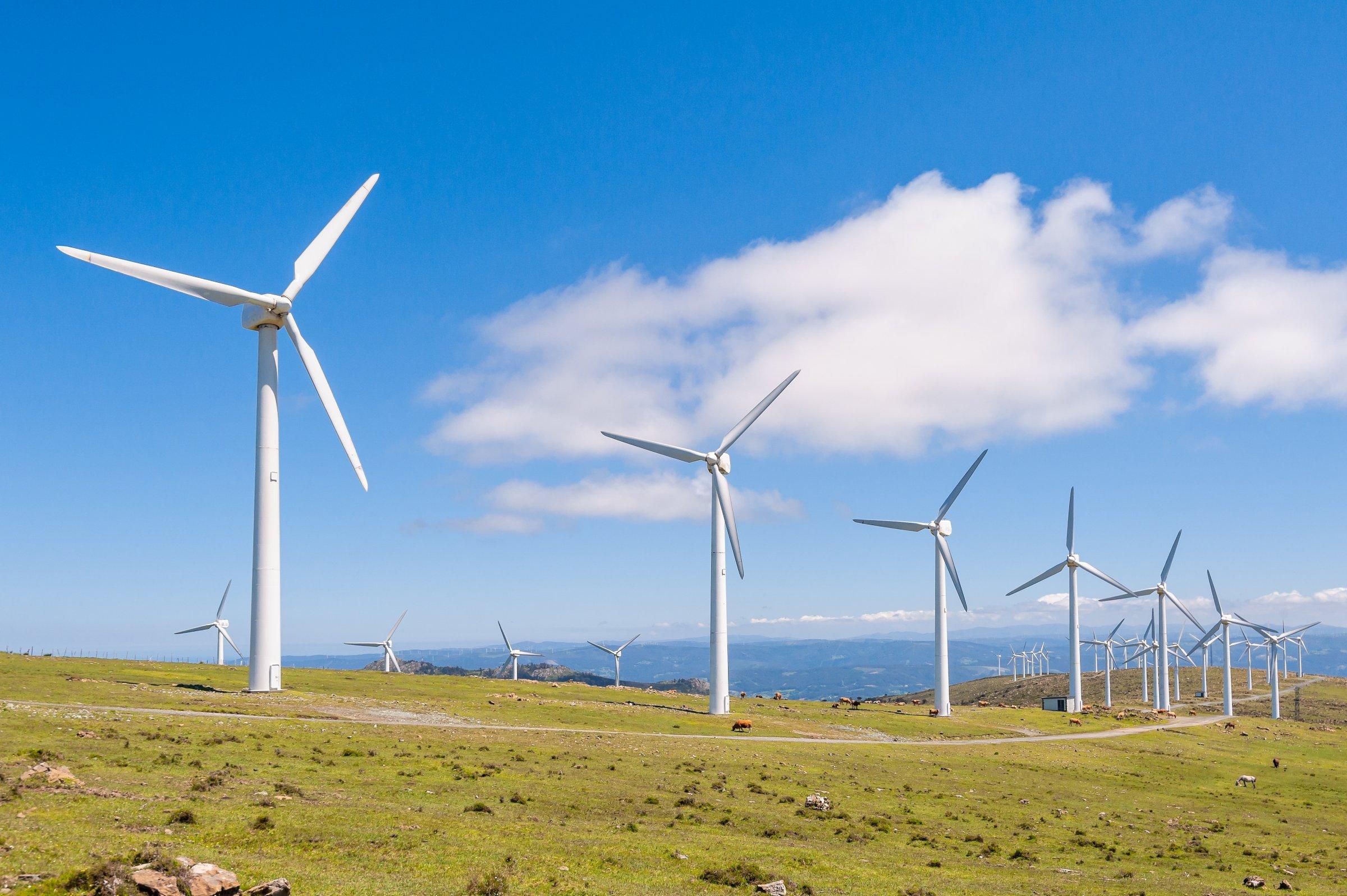 Umweltschützer unterstützen grüne dedizierte Server